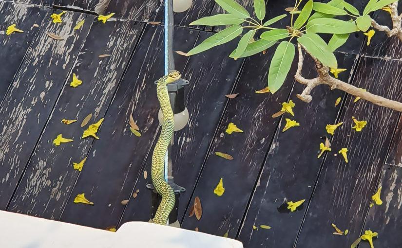 ทำยังไงให้หายกลัวงู